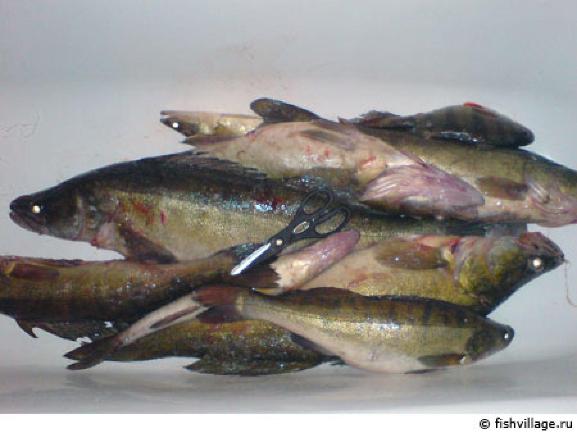 """Рыболовная база """"Плавучая деревня"""" Астраханская область, фото 6"""