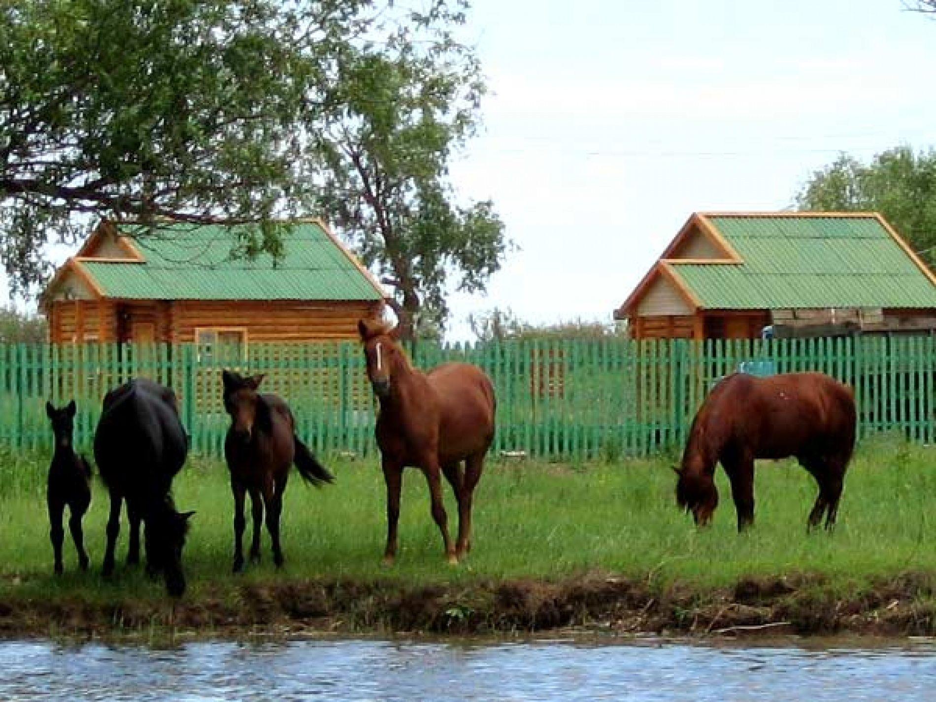 """База отдыха """"Заповедник"""" Астраханская область, фото 14"""