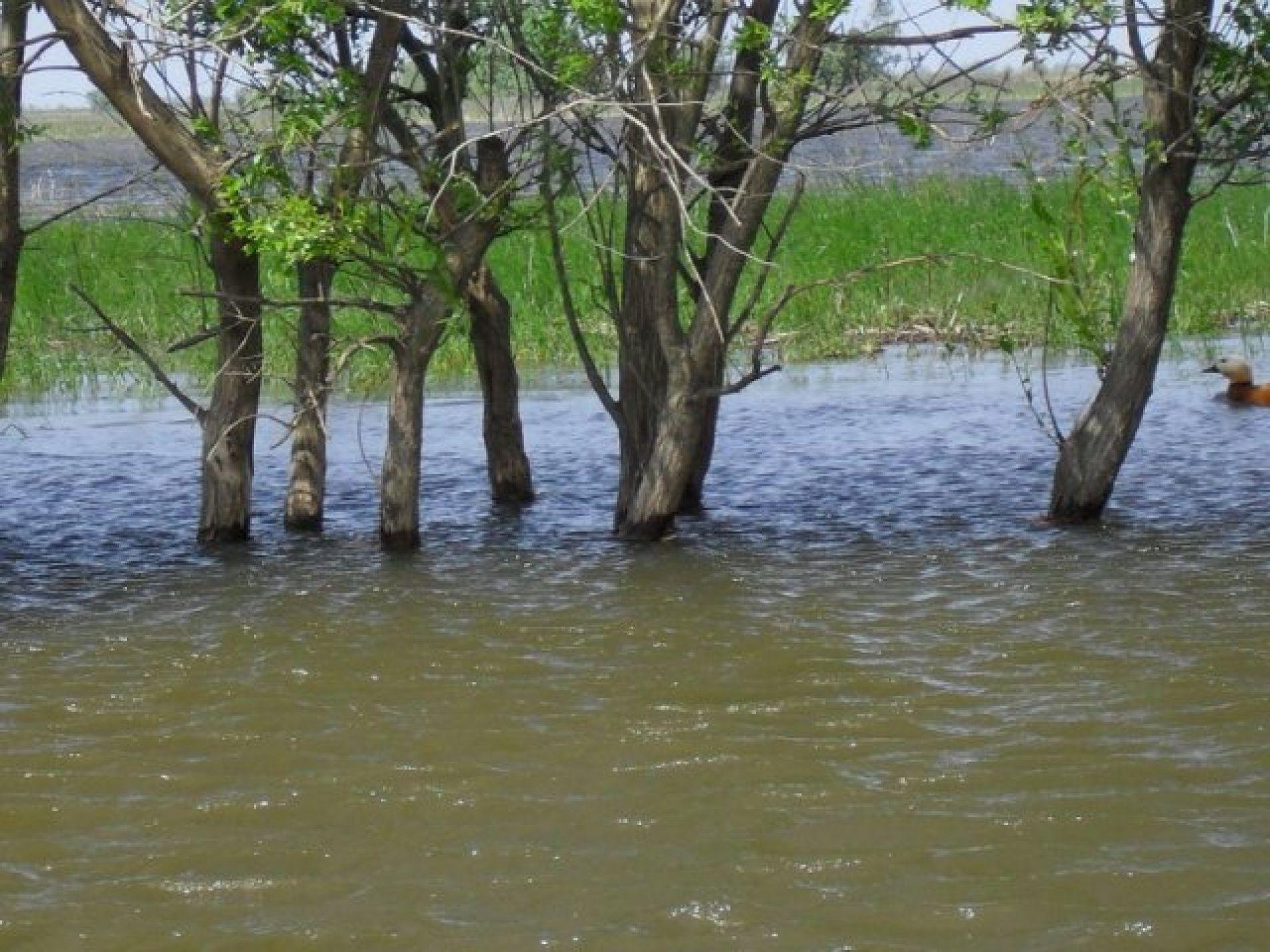 """Рыболовная база """"Волчок"""" Астраханская область, фото 7"""
