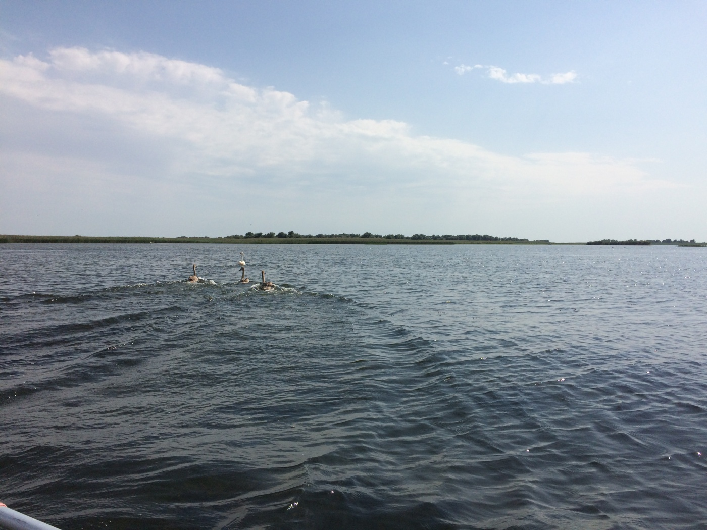 База отдыха «Лебедь» Астраханская область, фото 9