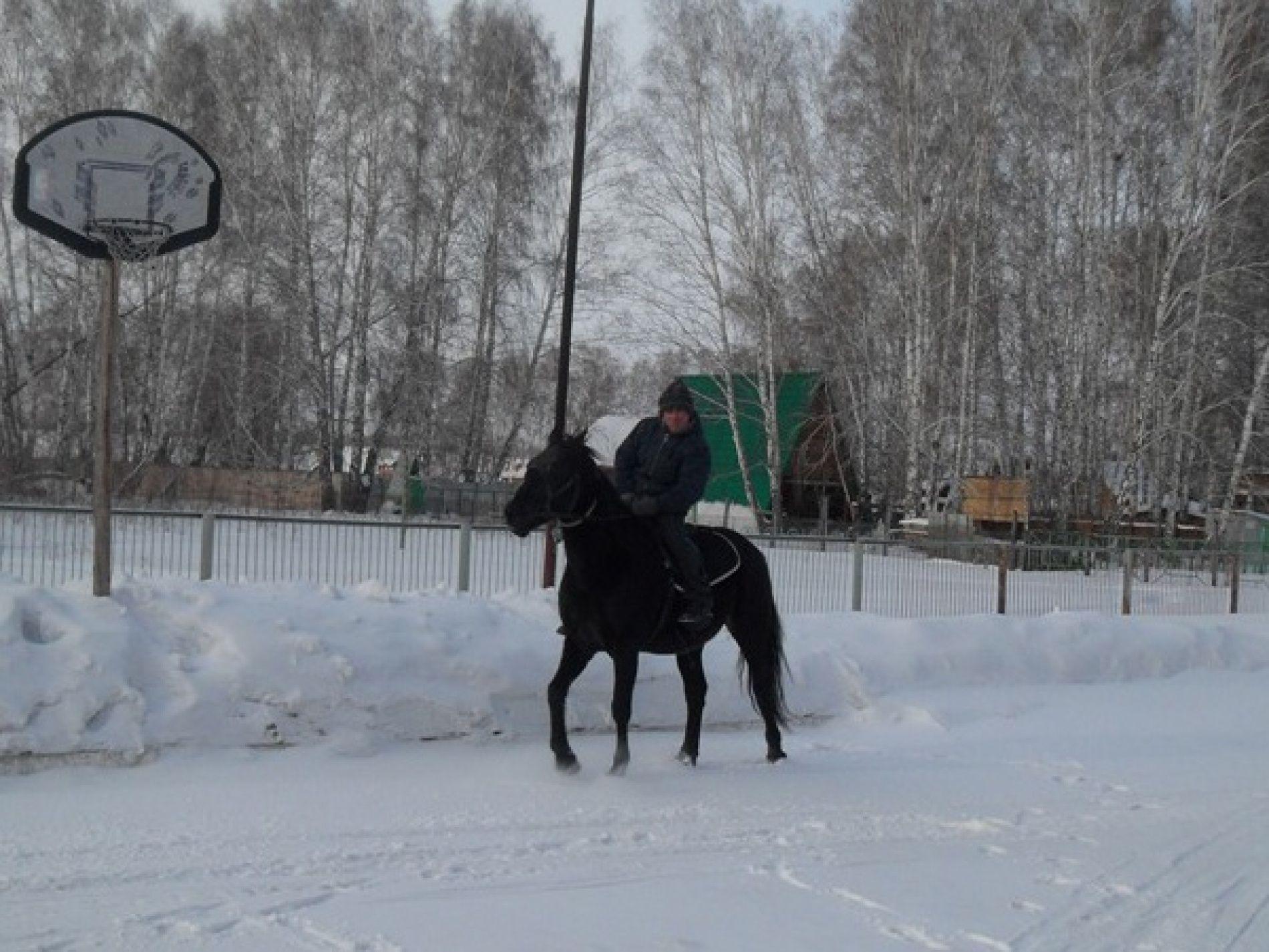 """База отдыха """"Вестфалика"""" Новосибирская область, фото 12"""
