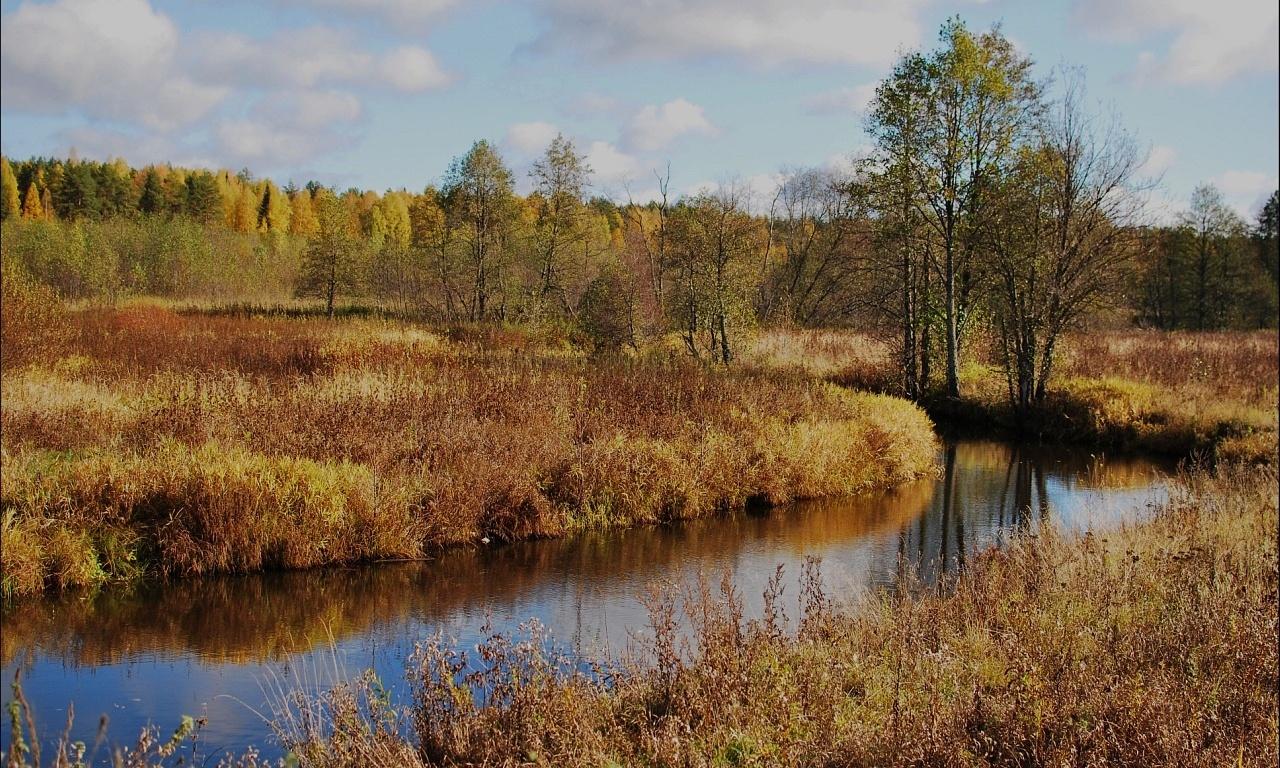 Центр ездового спорта «Северная Надежда» Костромская область, фото 8