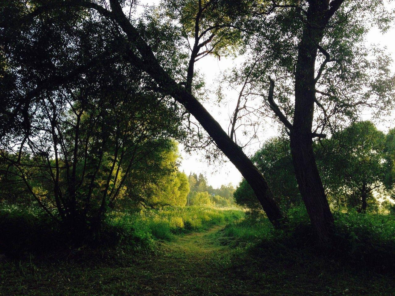 Парк-отель «Воробьи» Калужская область, фото 6