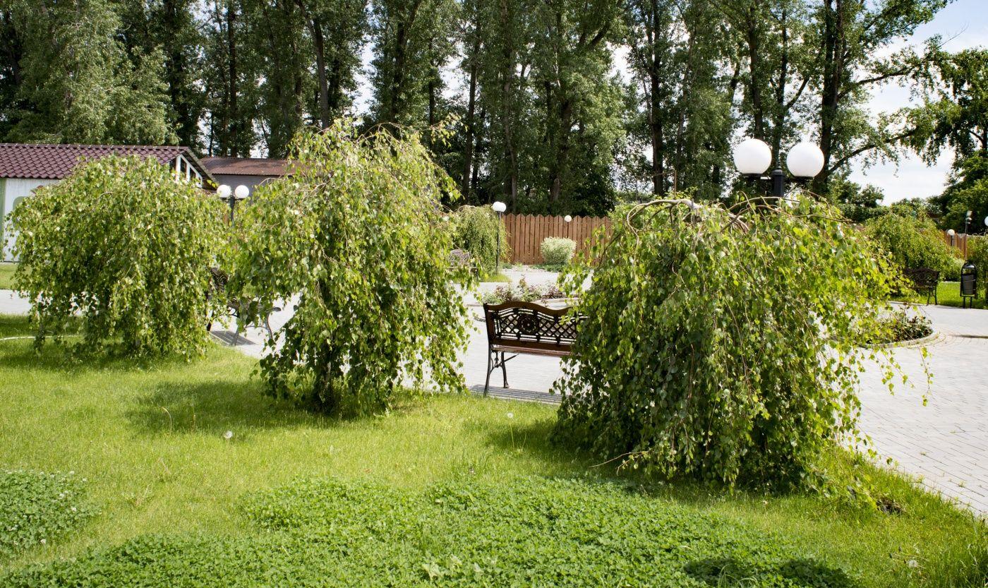 Загородный гостиничный комплекс «Атмосфера на Волге» Саратовская область, фото 17