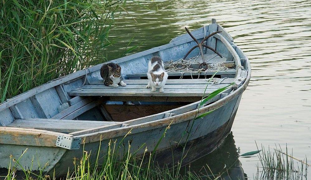"""База отдыха """"Рыбный Рай"""" Белгородская область, фото 7"""