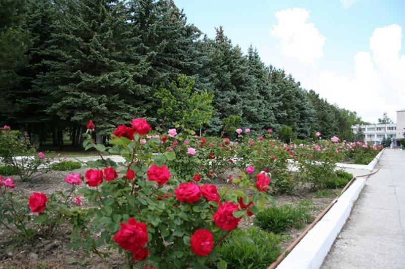 Санаторий «Черноморская зорька» Краснодарский край, фото 18