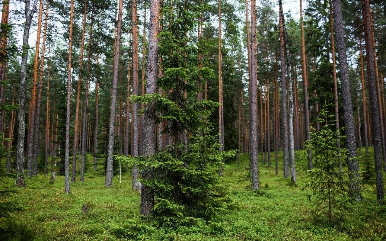 Эко-отель «Лес» Ленинградская область, фото 15