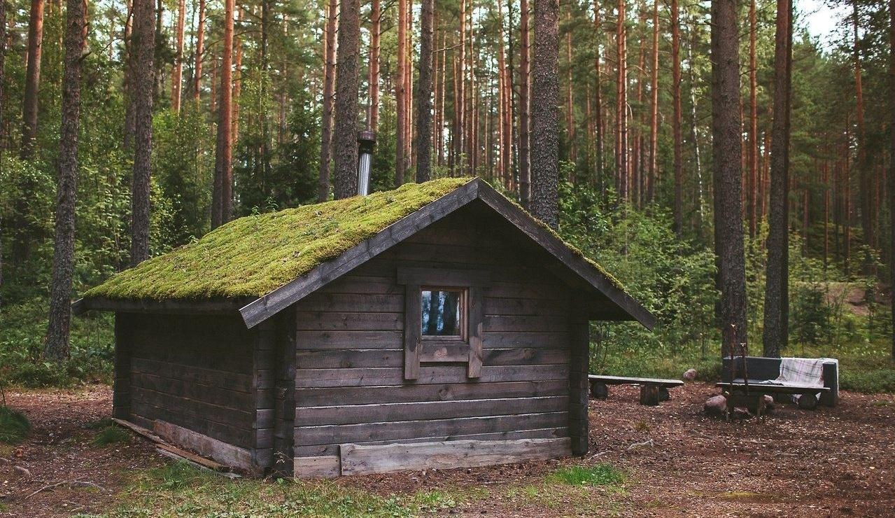 Эко-отель «Лес» Ленинградская область, фото 1