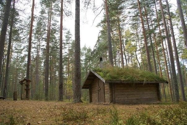 Эко-отель «Лес» Ленинградская область Экодомик «У Аняши», фото 1
