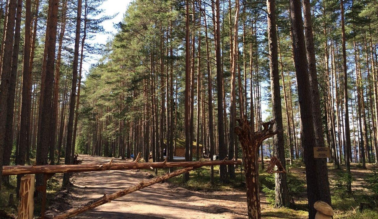 Эко-отель «Лес» Ленинградская область, фото 13