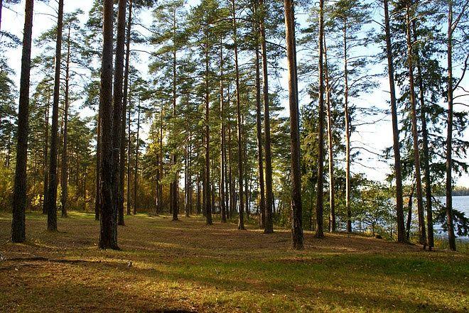 Эко-отель «Лес» Ленинградская область, фото 14