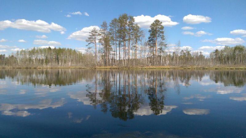 Конный двор «Струги» Ленинградская область, фото 9