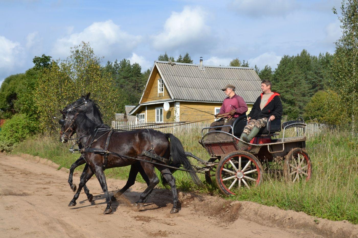 Конный двор «Струги» Ленинградская область, фото 11