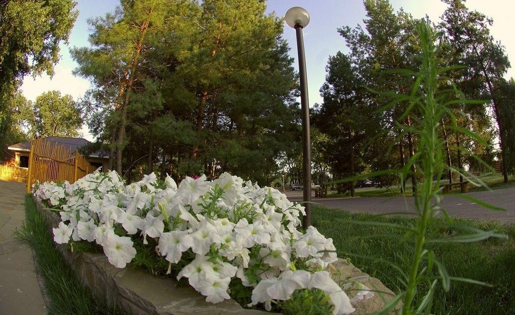 База отдыха «Лесная» Волгоградская область, фото 13