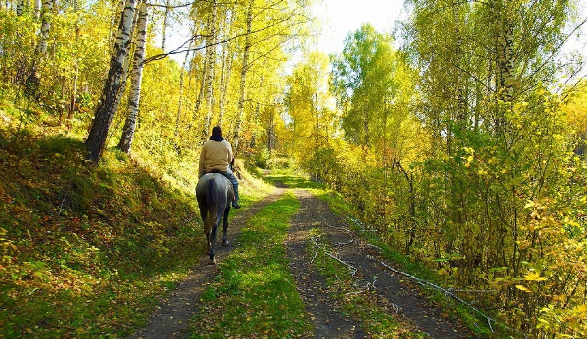 """База отдыха """"Медвежий угол"""" Алтайский край, фото 40"""