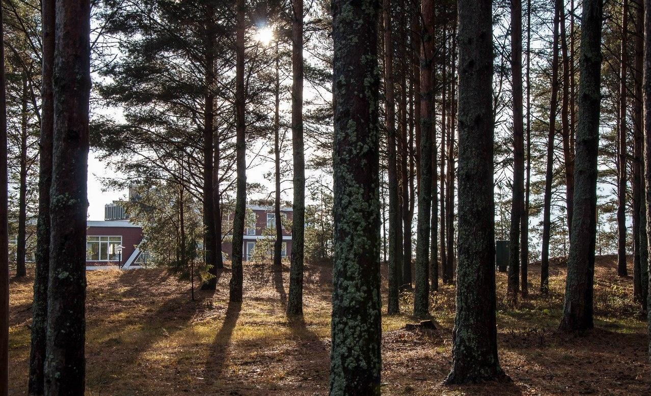 Парк-отель «Бухта Коприно» Ярославская область, фото 28