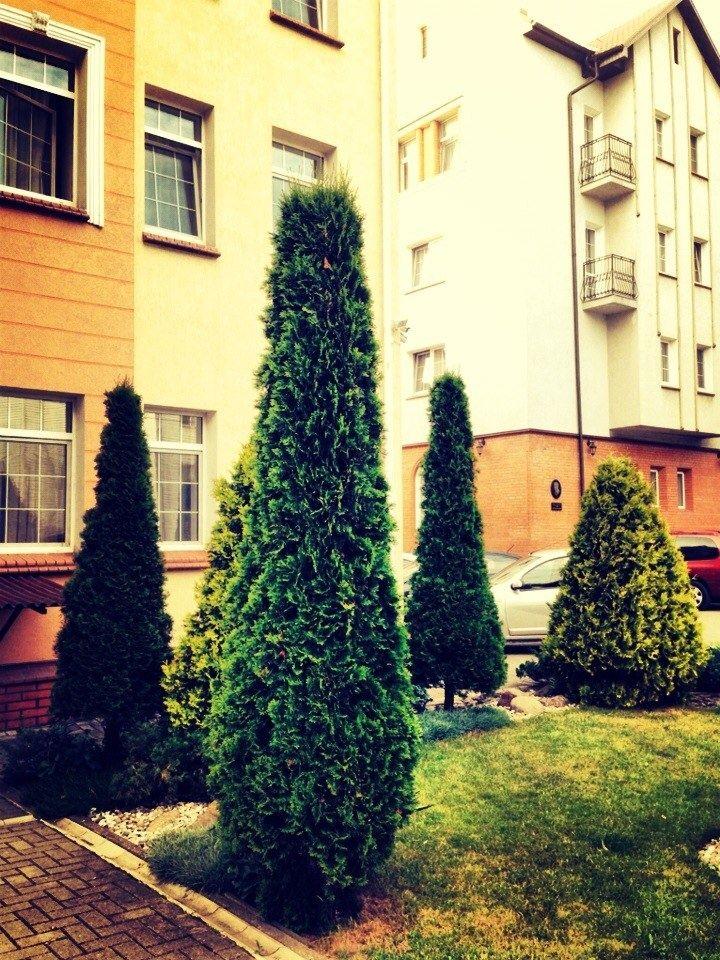 База отдыха «Самбия» Калининградская область, фото 23