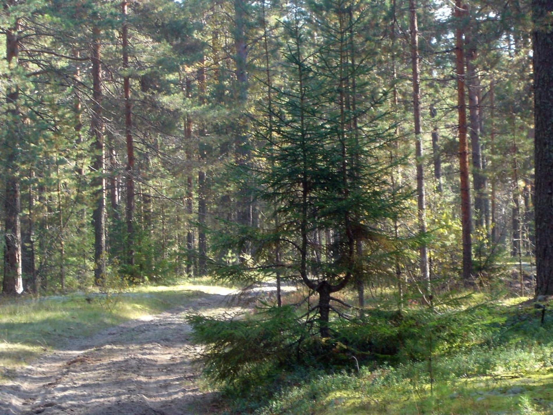 """База отдыха """"Ветлуга"""" Костромская область, фото 12"""