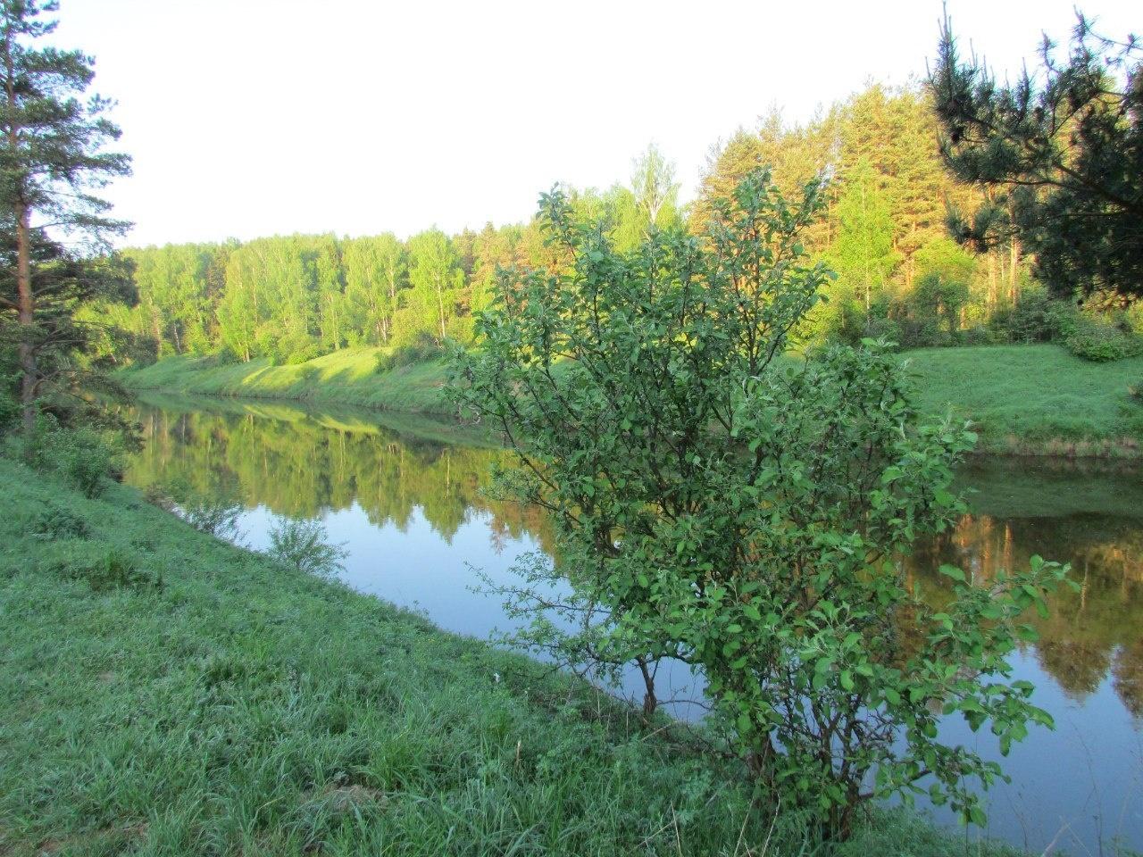 Парк-отель «Ярославль» Ярославская область, фото 11