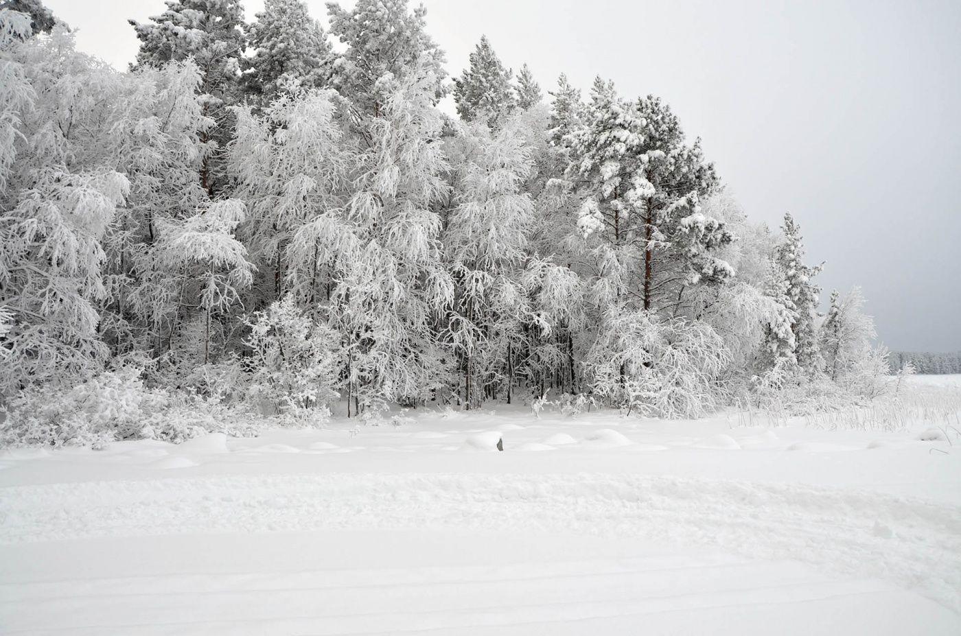 Комплекс гостевых домов «Karelia Village» Республика Карелия, фото 19