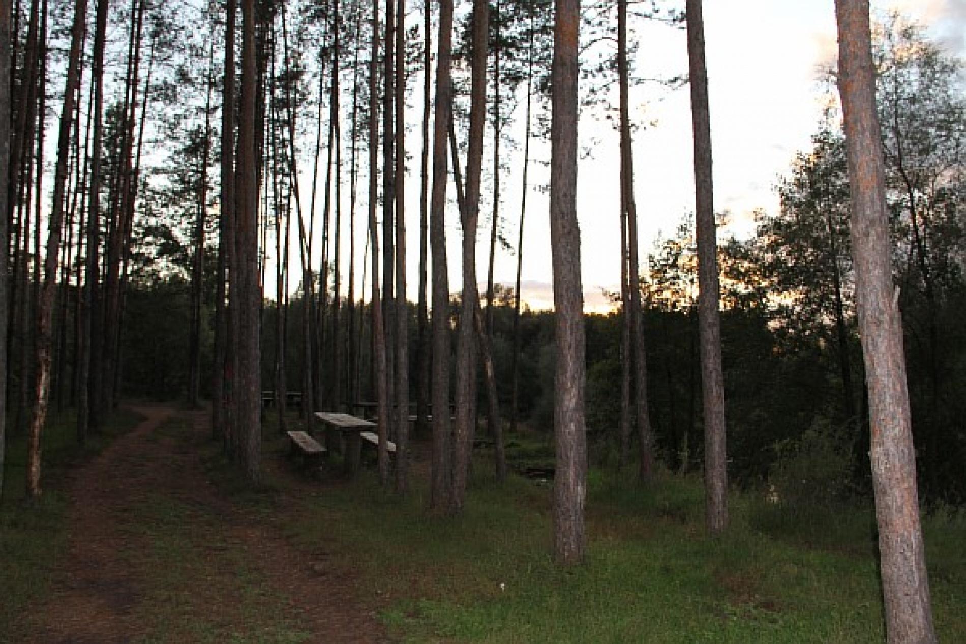 """База отдыха """"Сосны"""" Оренбургская область, фото 4"""
