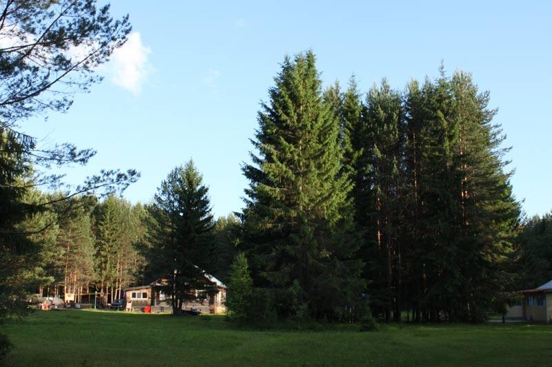 База отдыха «Сосновые шишки» Кировская область, фото 5