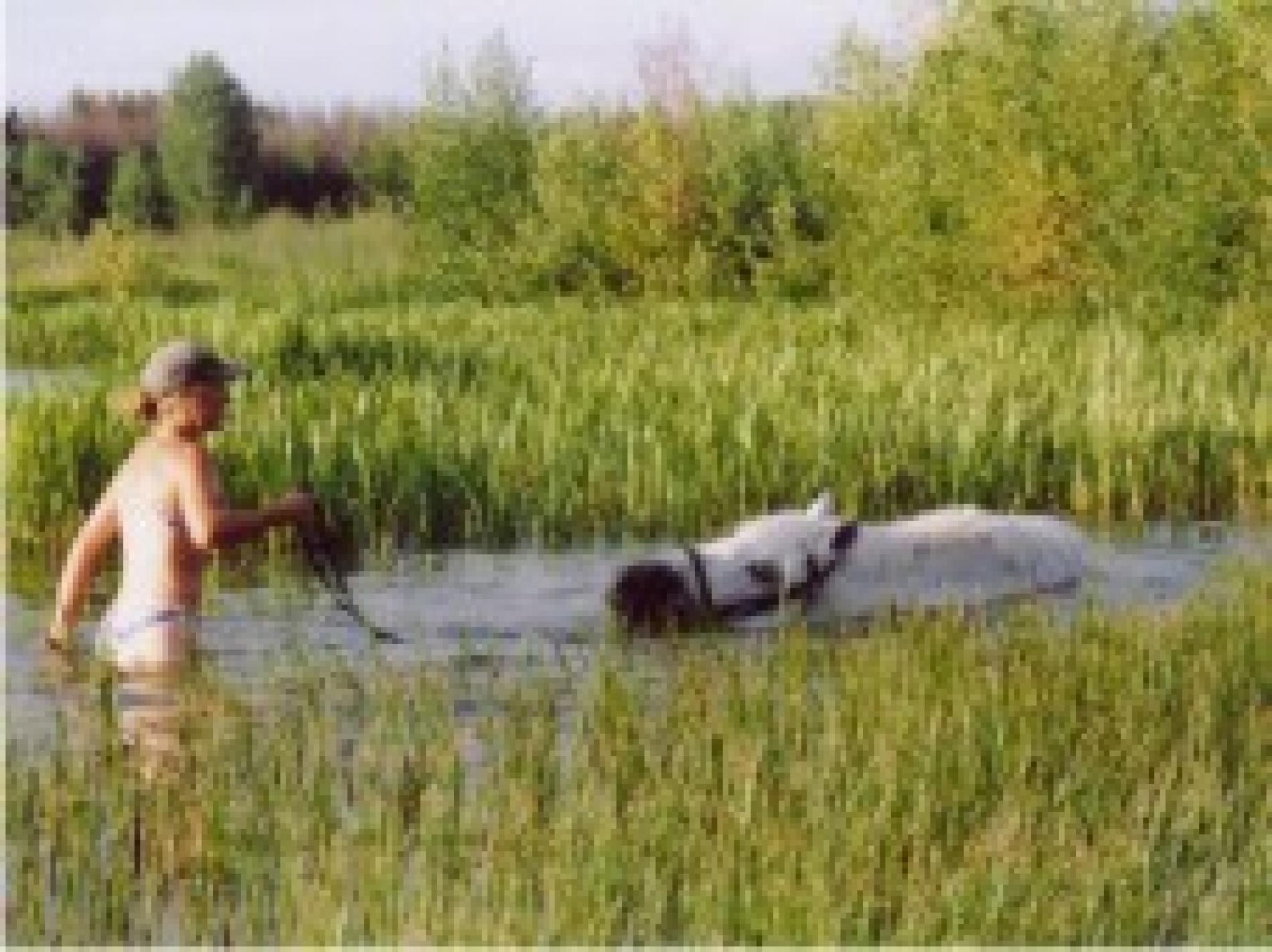 """База отдыха """"Сумбулово"""" Рязанская область, фото 20"""