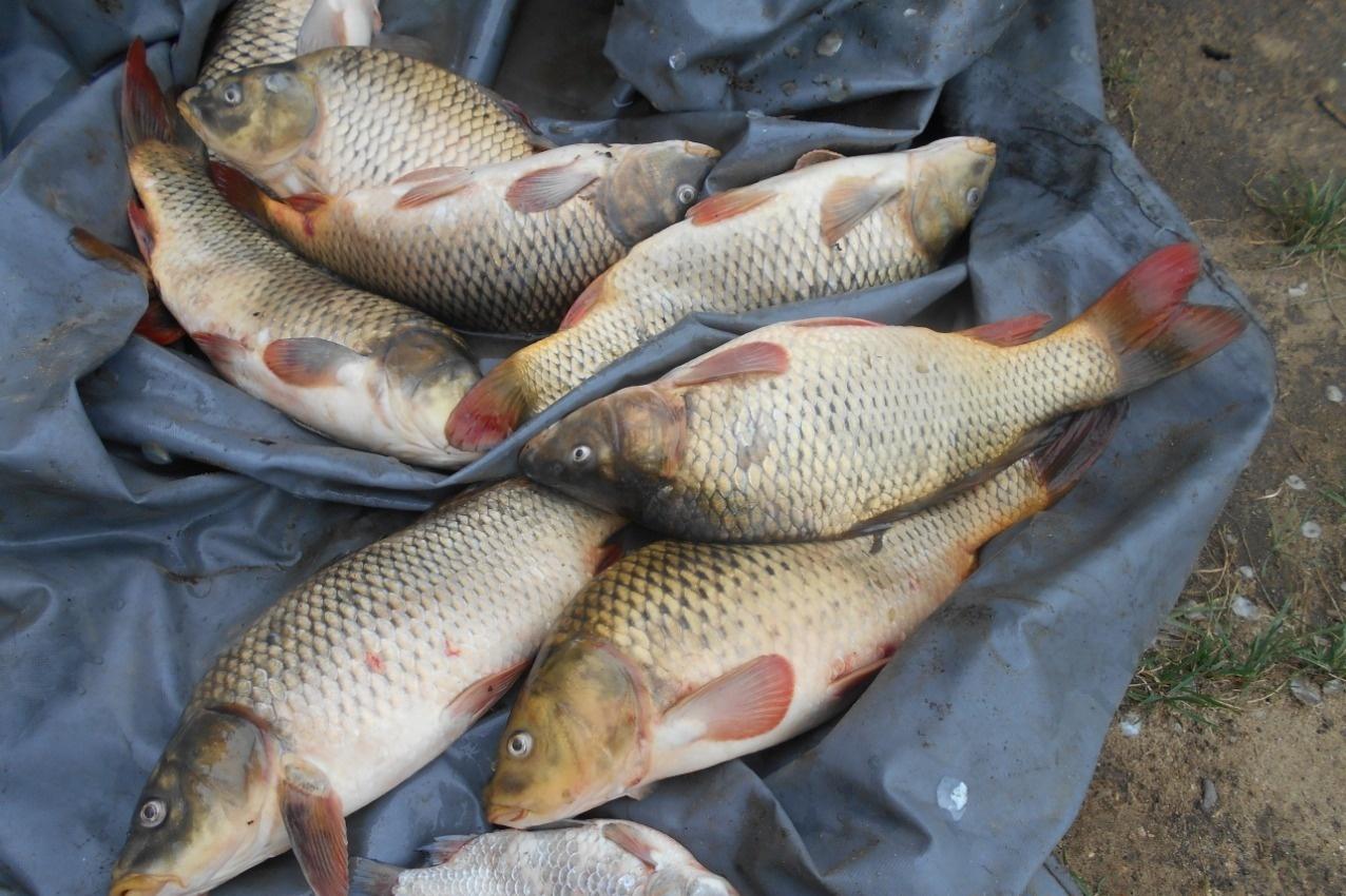 Рыболовная база «Рыбхоз у Власьево» Владимирская область, фото 13
