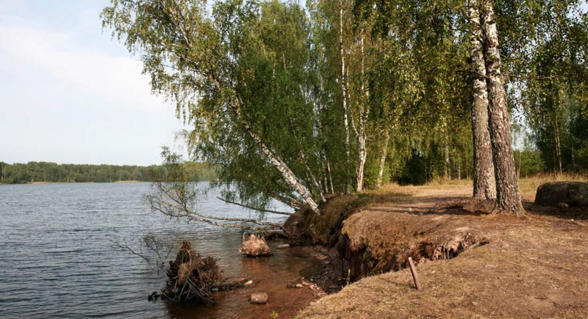 """База отдыха """"Великое озеро"""" Новгородская область, фото 8"""