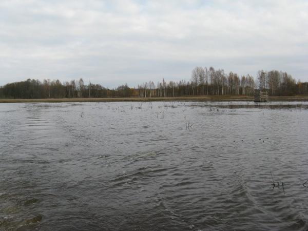 Охотничье хозяйство «Раздобарино» Смоленская область, фото 8