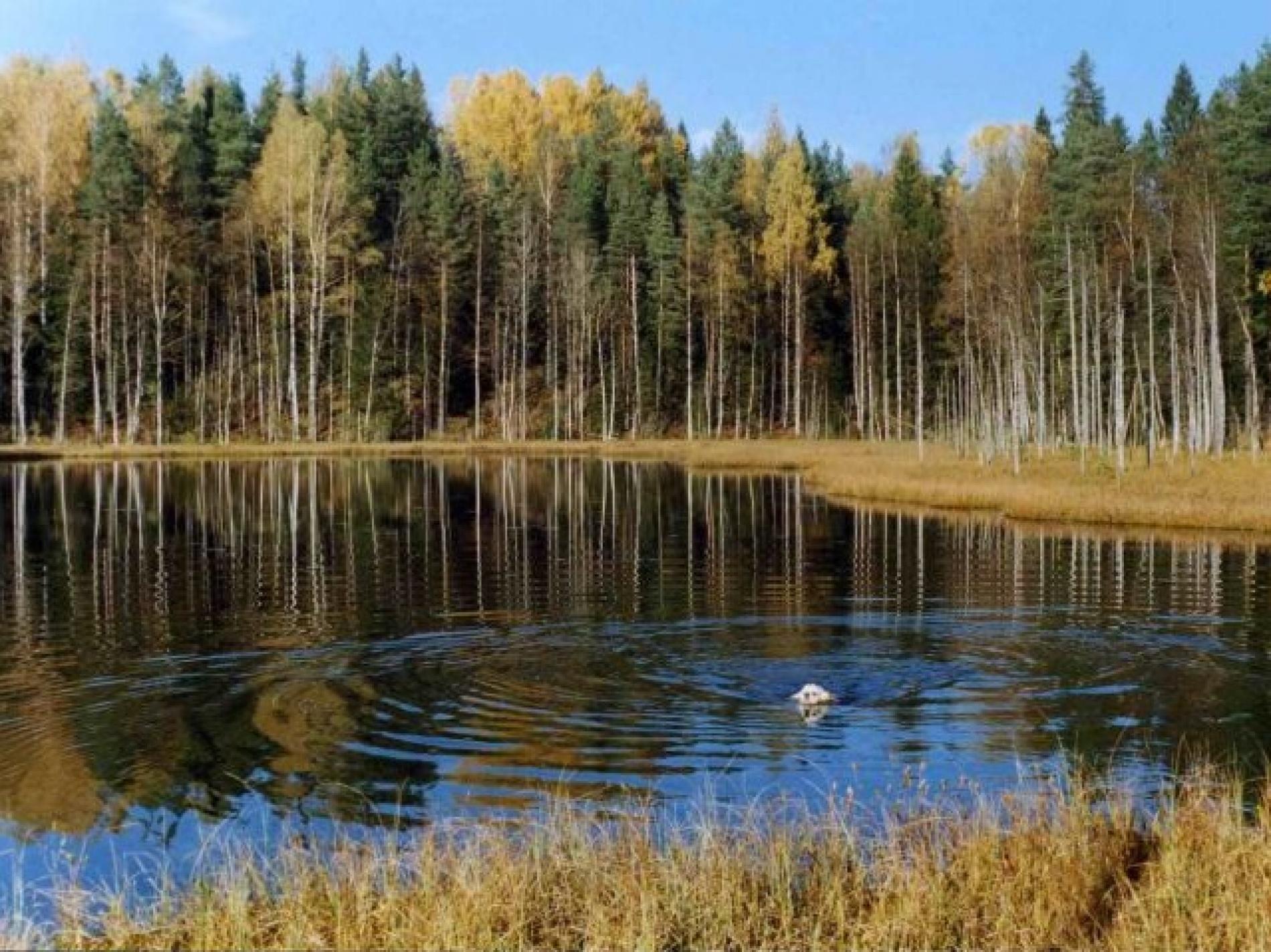 """Охотничья база """"Кречет"""" Смоленская область, фото 11"""