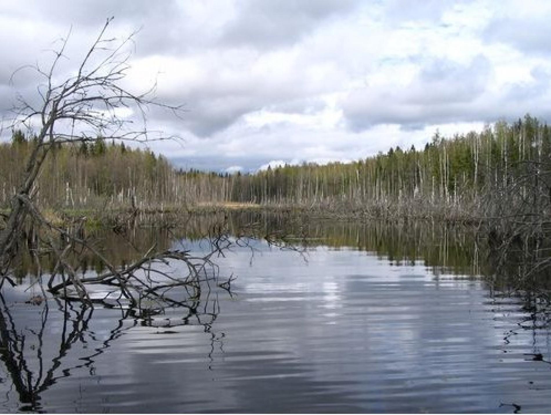 """Охотничья база """"Кречет"""" Смоленская область, фото 12"""