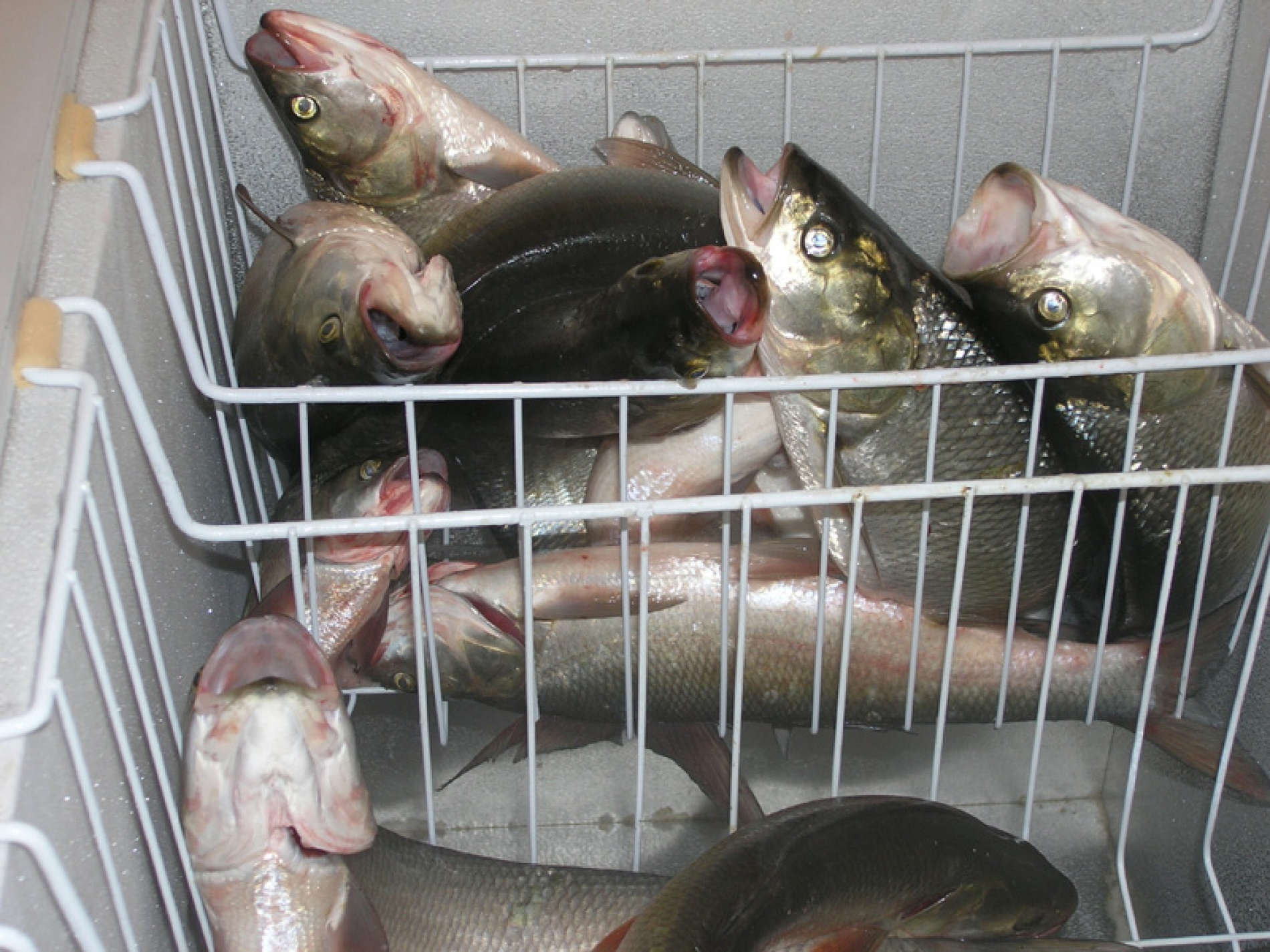 """Рыболовно-охотничья база """"Мария"""" Республика Калмыкия, фото 11"""