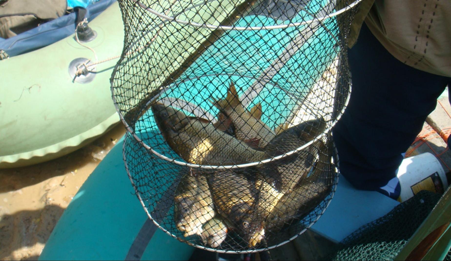 Рыболовная база «Серебряный ключ» Воронежская область, фото 11