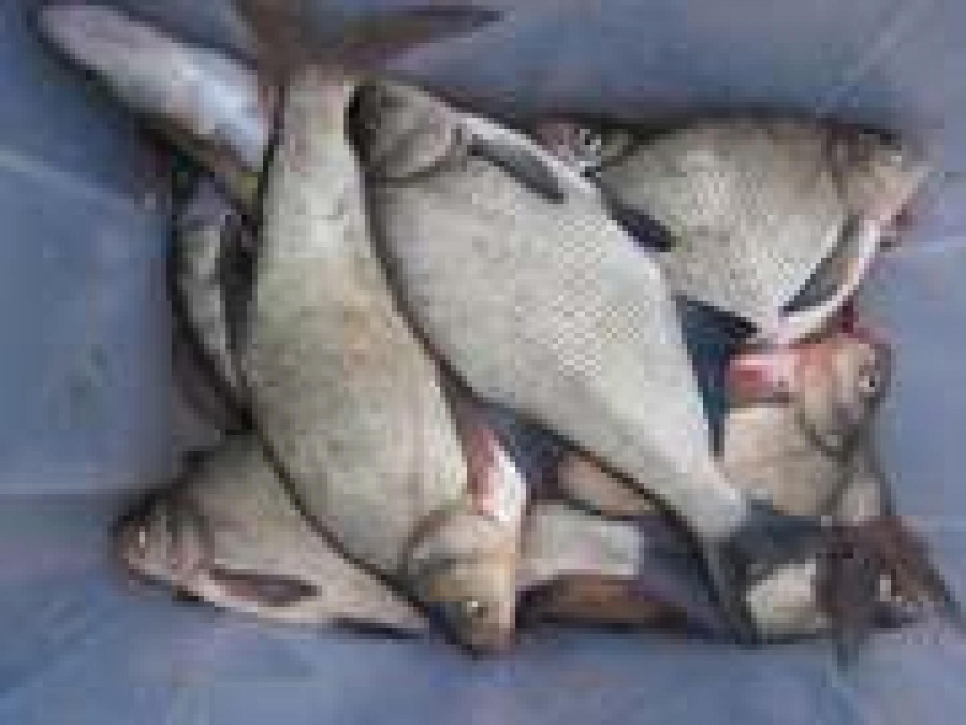 "Рыболовная база ""Пристань рыбака"" Астраханская область, фото 8"