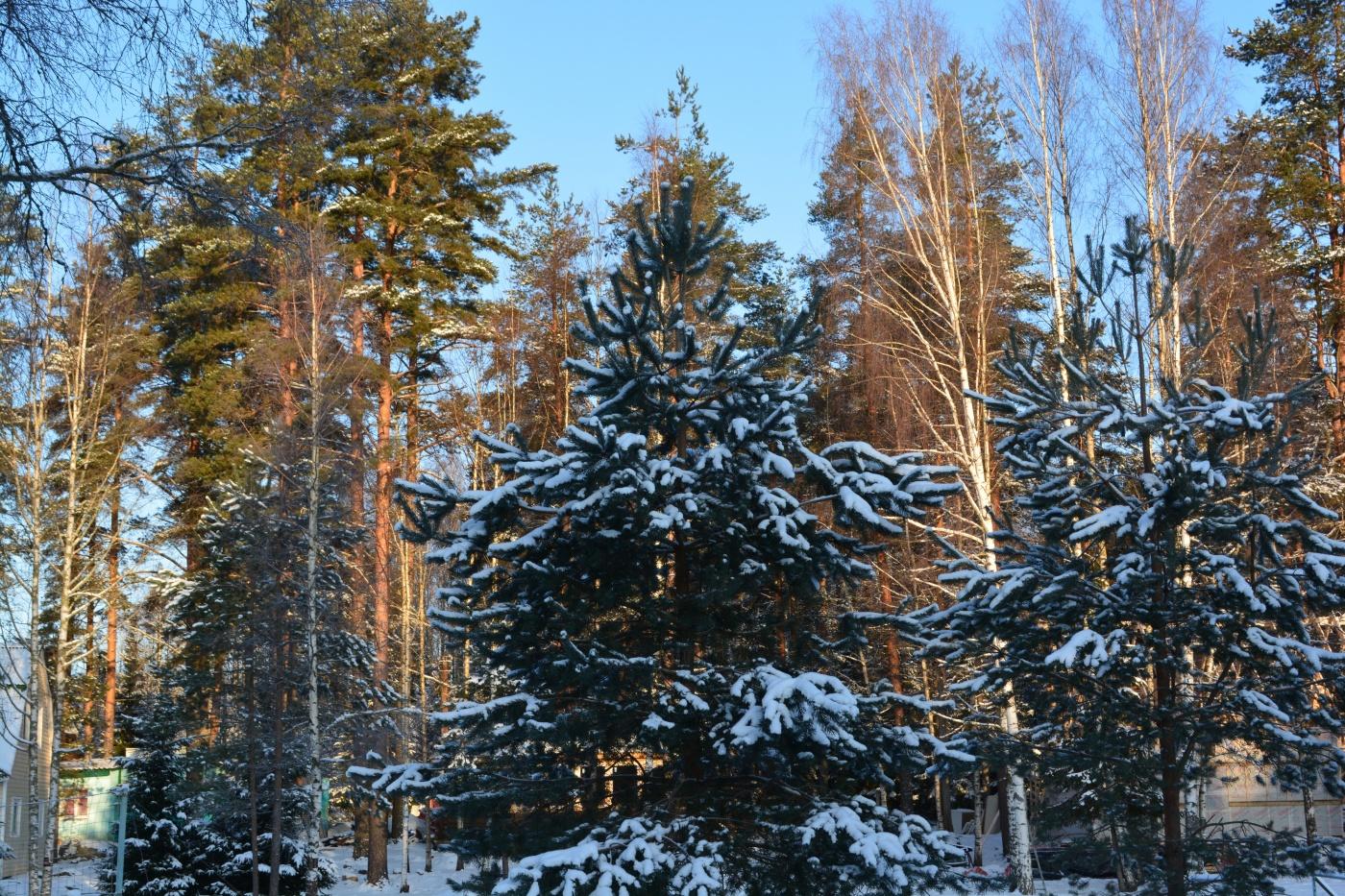 База отдыха «Вуокса-Хутор» Ленинградская область, фото 17