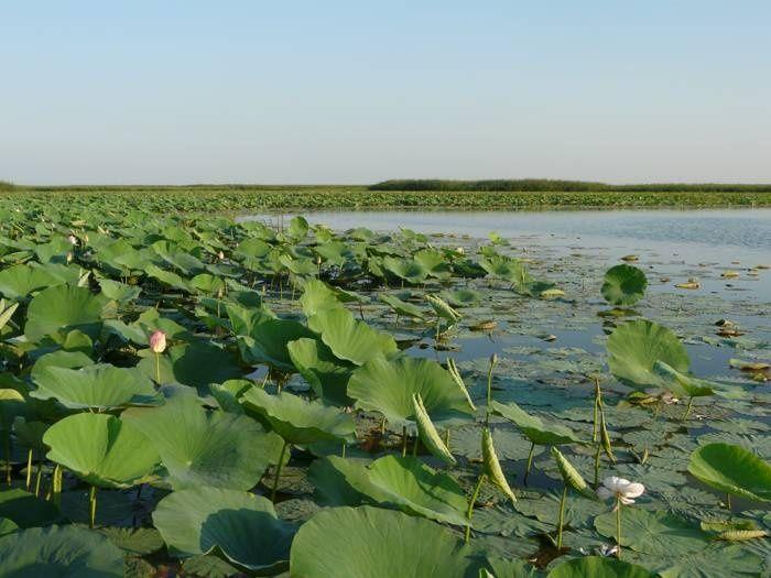 """Рыболовно-охотничья база """"Тихая"""" Астраханская область, фото 11"""